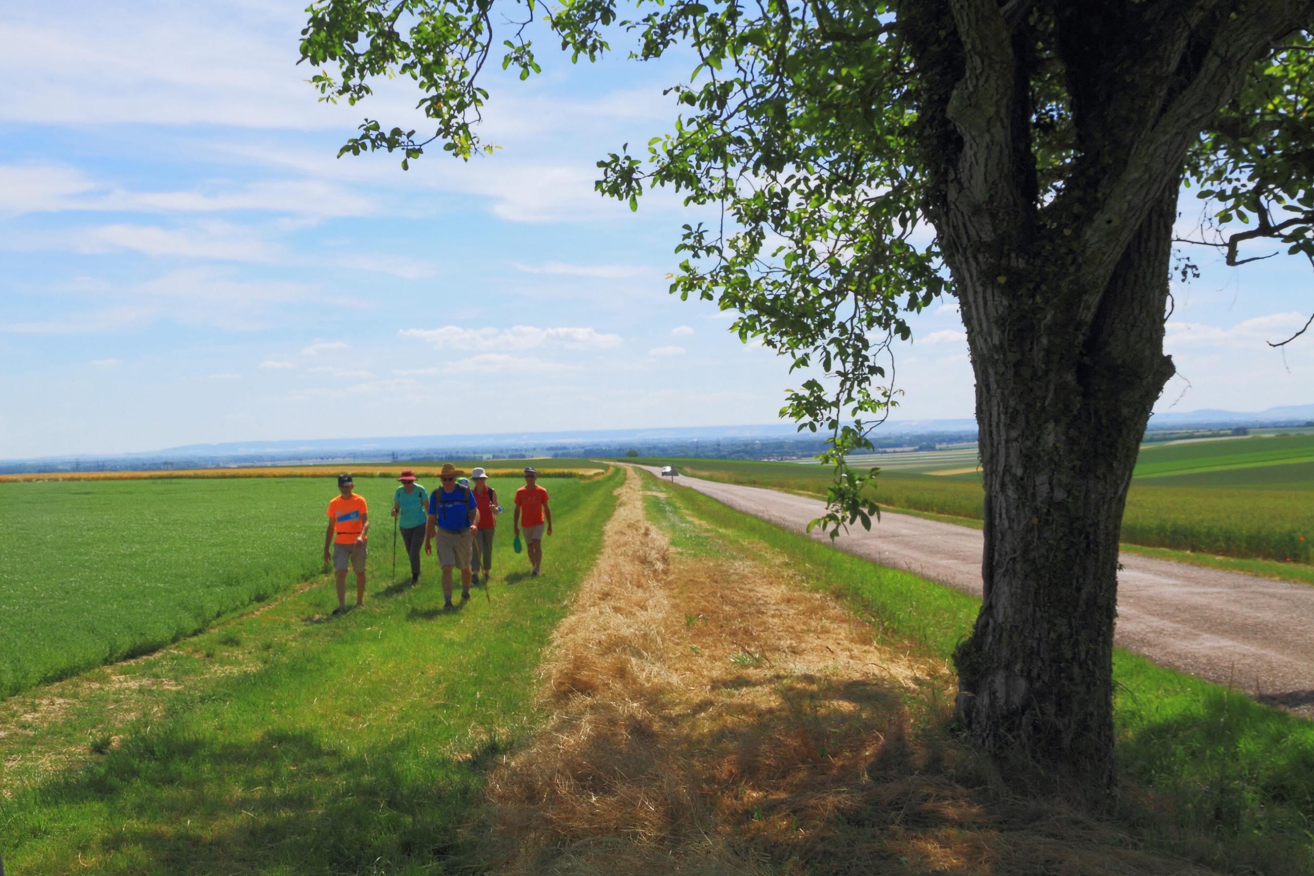 La plaine de Troyes depuis le noyer de la côte de Bouranton